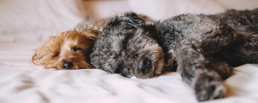 Gelbett Zwei Hunde